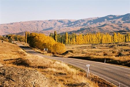 Golden Autumn in Central Otago