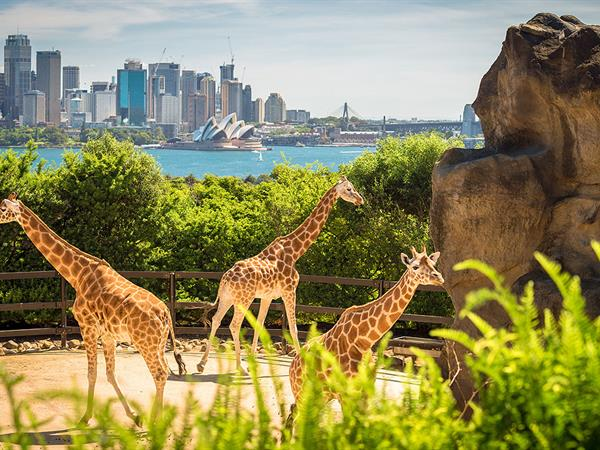 Travelling with the Family: Sightseeing with Young Children in Sydney
