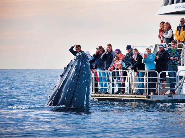 Brisbane Whale Watching Swiss-Belhotel Brisbane, South Brisbane
