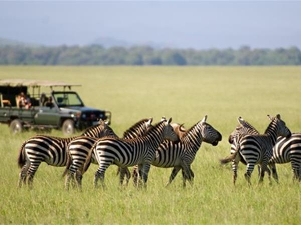 Australasian Safari Swiss-Belhotel Brisbane