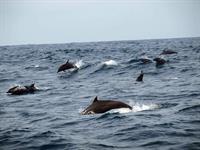 Dolphin Cruise Bali Hai-Cruise