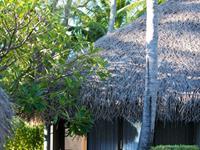 Vini Bungalow Hotel Maitai Rangiroa