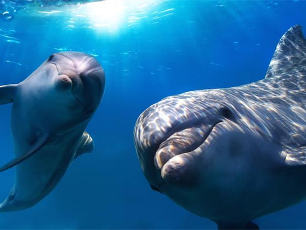 海豚天堂(Dolphins in Paradise ) 布里斯班瑞雅大酒店