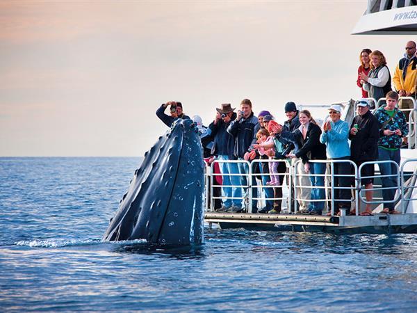 布里斯班观鲸 布里斯班瑞雅大酒店