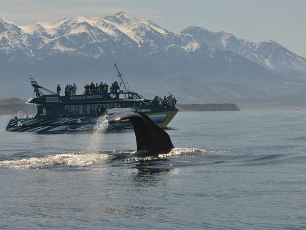 Whale Watch Kaikoura Full Day Tour