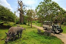 Rhino Package