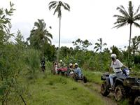Quad / Buggy / Canyon Tubing + Taro Elephant Safari