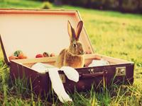 Easter Special - Stay & SAVE 15%