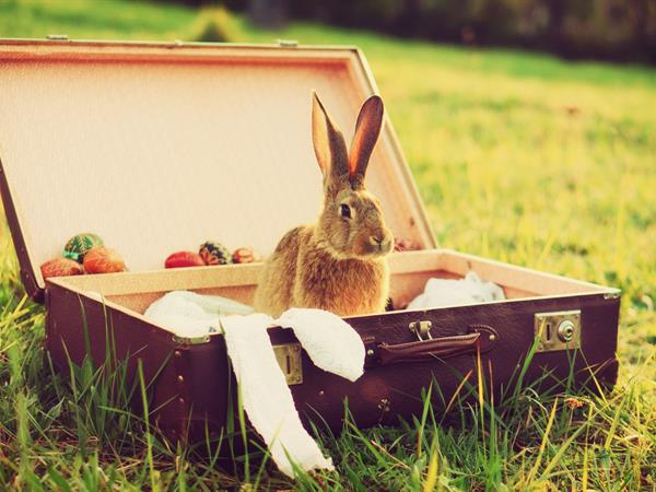Easter Special - Stay & SAVE 15% Distinction Palmerston North Hotel & Conference Centre