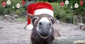 Christmas Parties