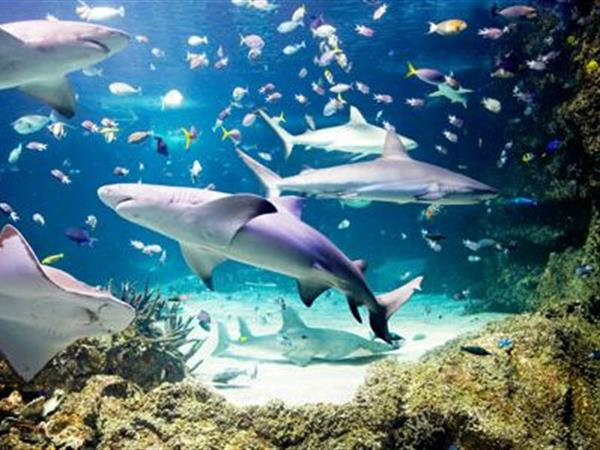 Sydney Aquarium & Wildlife World