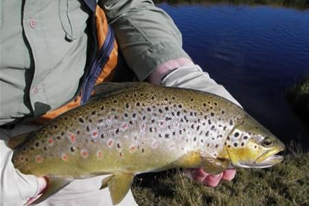 Otago Trout Fishing