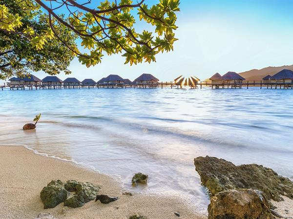 Early Bird -20% with breakfast included