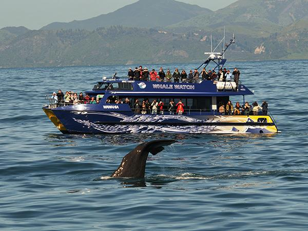 13 Day - Wilderness Adventure Tour Exclusive Tailored Luxury New Zealand Tours