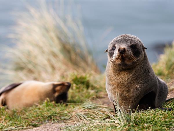 Monarch Wildlife Cruises & Tours Dunedin Leisure Lodge - A Distinction Hotel