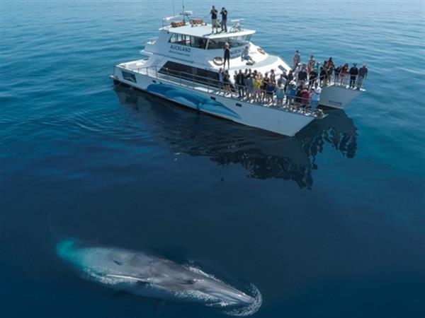 Auckland Whale and Dolphin Safari Tours Swiss-Belsuites Victoria Park, Auckland, New Zealand