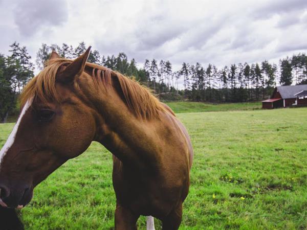 Pakiri Beach Horse Rides Swiss-Belsuites Victoria Park, Auckland, New Zealand