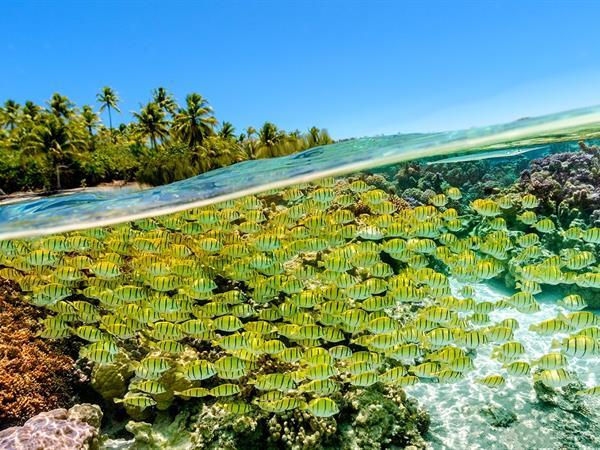 Sous l'eau Le Taha'a by Pearl Resorts