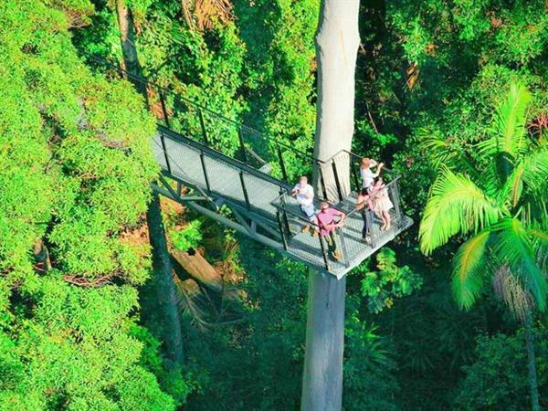 Rainforest Skywalk Tamborine