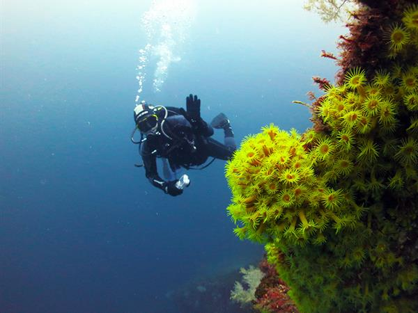Dive Milford Sound