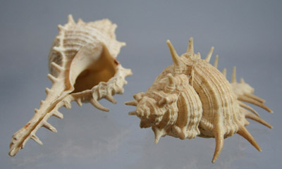 Collection of Shells HC118/1-22