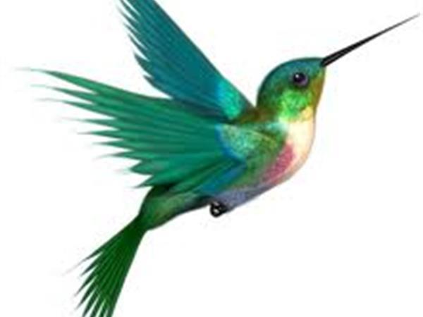 How Google Hummingbird affects you