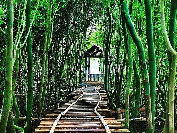 Wana Tirta Mangrove Jogja Zest Yogyakarta