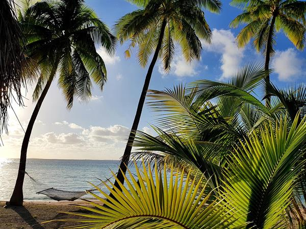 Stay 4 nights, Save 25% with breakfast included Le Tikehau by Pearl Resorts