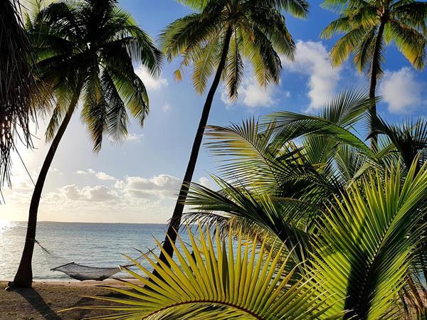 Stay 4 nights, Save 25% with breakfast included Tikehau Pearl Beach Resort