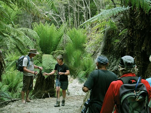 Tarawera Trail Totally Tarawera