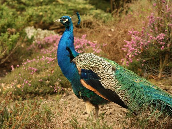 Ragunan Zoo Swiss-Belresidences Kalibata