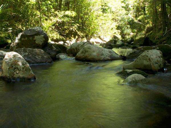 PUKETI FOREST Paihia Top 10