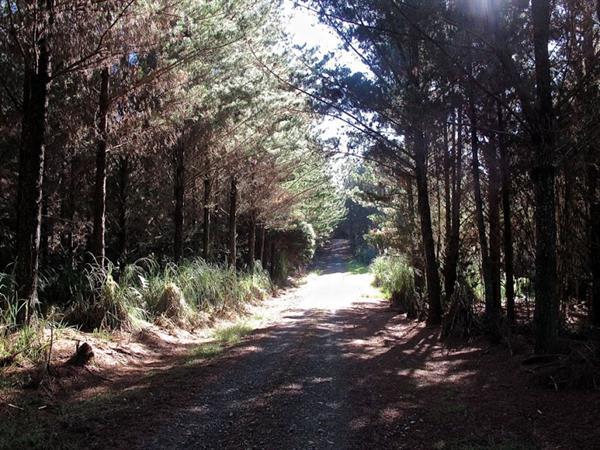 WAITANGI-KERIKERI FOOT TRAIL Paihia Top 10