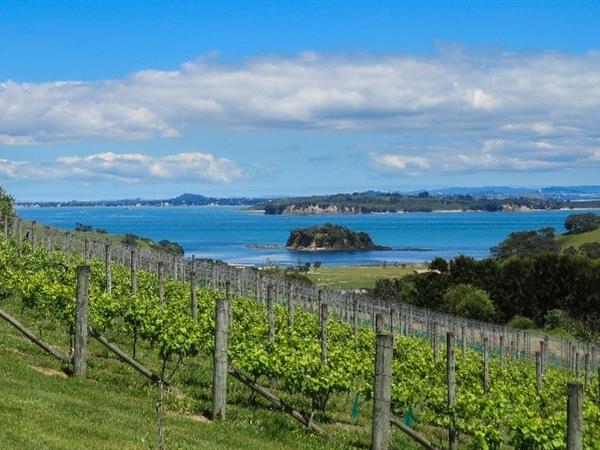 Ultimate Waiheke Island Dining Experiences