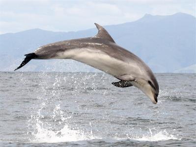 Picton - Wildlife Tour NZ Shore Excursions