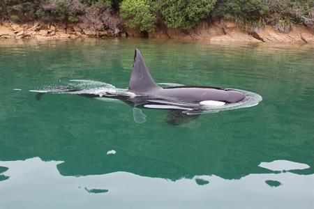 Picton - Wildlife Tour No 8 Tours for NZ Shore Excursions