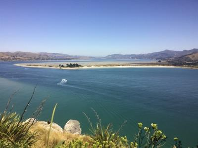 Dunedin Highlights