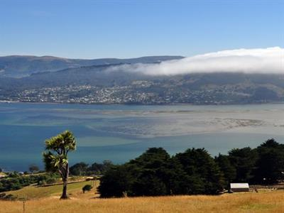 Dunedin-Highlights No 8 Tours for NZ Shore Excursions