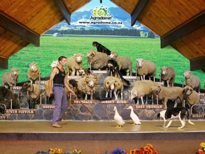 Rotorua - Te Puia & Agrodome Farm Show NZ Shore Excursions