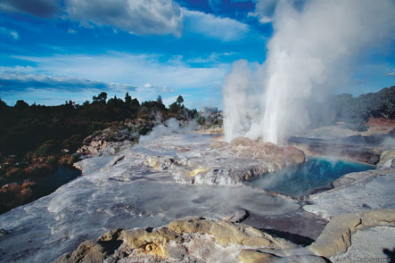 Rotorua - Agrodome Farm Tour and Geothermal