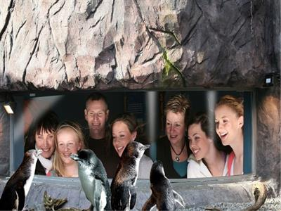 Christchurch Sightseeing with Antarctic Centre NZ Shore Excursions
