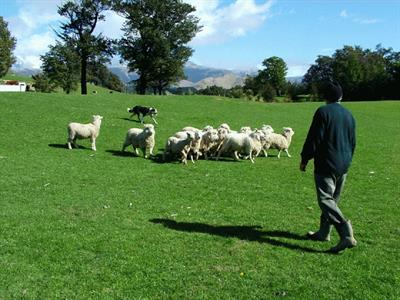 Sheep Farm tour