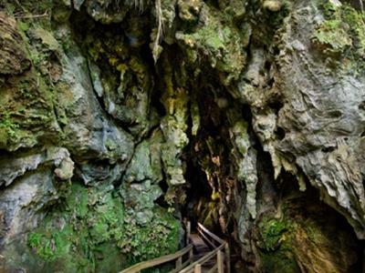 Bay of Islands - Plus Caves Tour No 8 Tours for NZ Shore Excursions