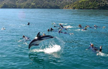 Arakoa - Swimming with Dolphins