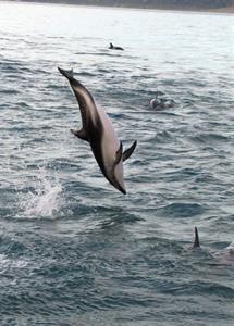 Arakoa - Harbour Nature Cruise NZ Shore Excursions