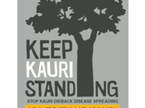 Keep Kauri Standing Coromandel Adventures