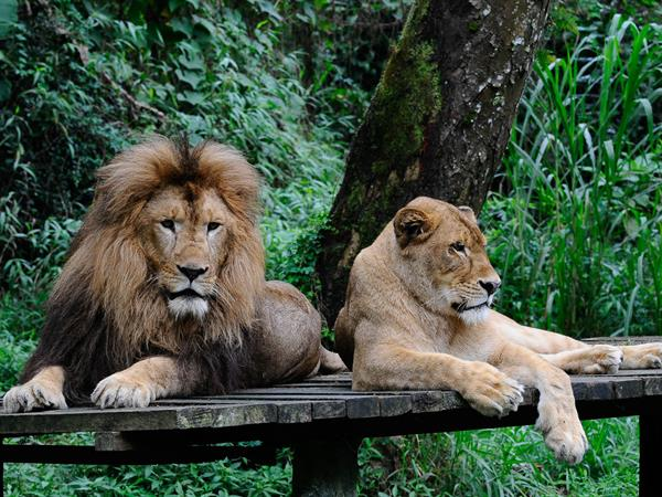 Taman Safari Swiss-Belinn Bogor