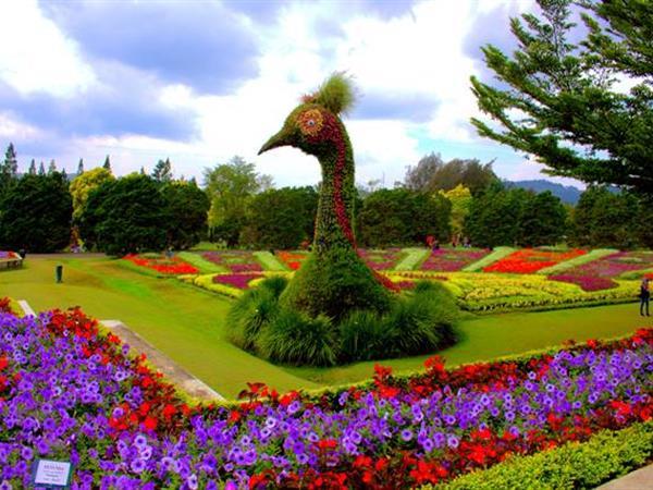 Flowers Field Swiss-Belinn Bogor