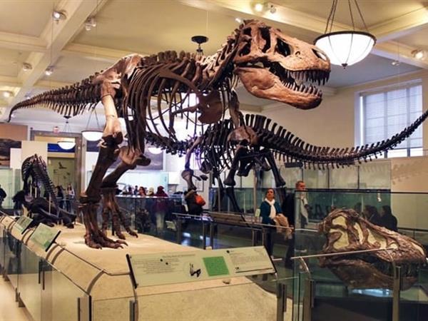 Museum Zoology Swiss-Belinn Bogor