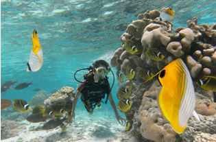 Adventure Cook Islands - Reef To See
